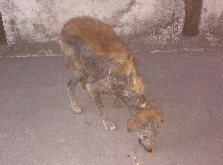 Animal Aid Rescue